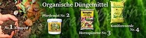 Wann Thuja Schneiden : lebensbaum golden smaragd ~ Markanthonyermac.com Haus und Dekorationen