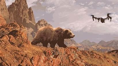 Drones Bears Stressed Drone Wildlife Human Bear
