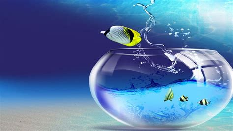 3d Animal Wallpaper 3d Fish Wallpaper - new fish wallpapers 66