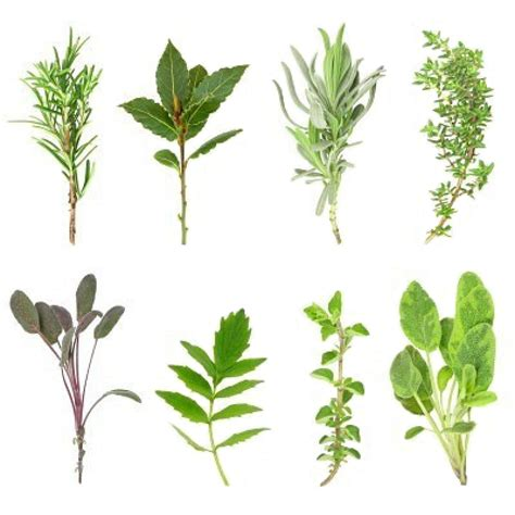 herbe de cuisine herbes aromatiques greta garbure