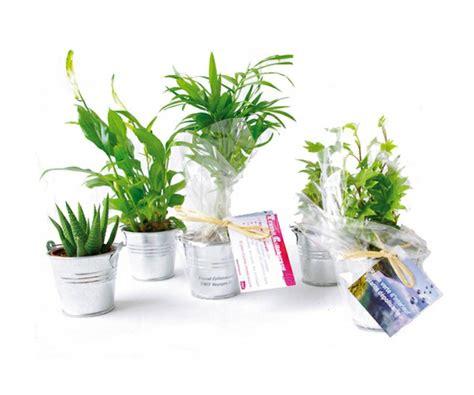 plantes de bureau un bureau sain avec les plantes dépolluantes