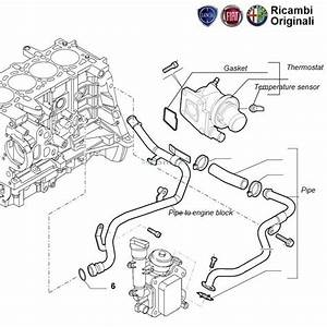 Fiat Palio Stile  Coolant Thermostat  U0026 Hoses  1 3 Multijet