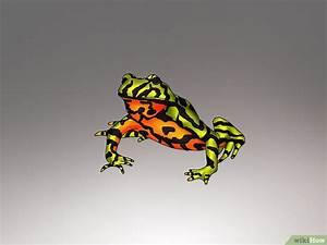 Frosch Als Haustier : haltung und pflege von fr schen wikihow ~ Buech-reservation.com Haus und Dekorationen