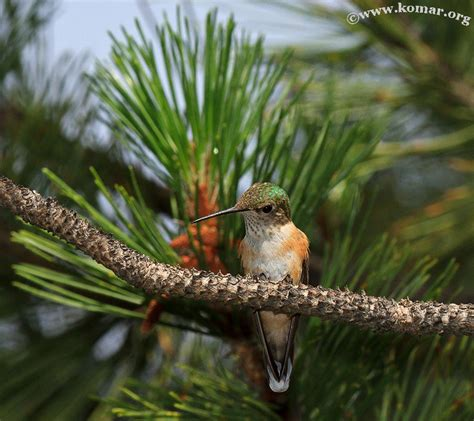 baby hummingbird nest advgrrl motorcycle adventures more