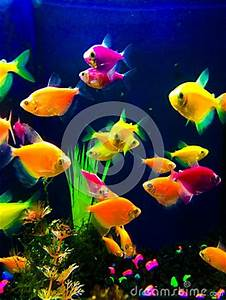 Neon Colorful Fish Aquarium Stock Image