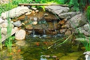 Fontaine Pour Bassin A Poisson : jardin d 39 eau style faune et flore ~ Voncanada.com Idées de Décoration