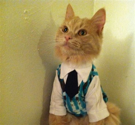cat sweaters for cats sweater vest with collar and tie cat clothes
