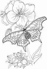 Coloring Pages Butterfly Adult Printable Tsgos Yarn Patterns Nature sketch template