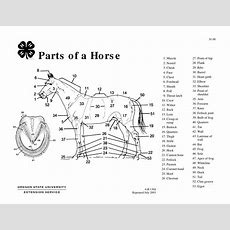 Parts Of A Horse Teaching Aid  Osu Extension Catalog  Oregon State University