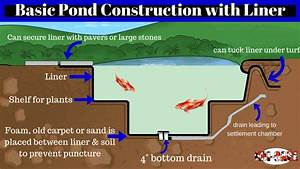 Koi Pond Construction  The Basics Of Building Your Pond