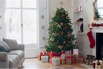 Christmas Trees Military Families Diego San Fox