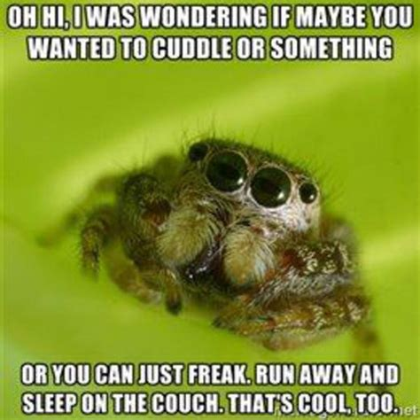 Cute Spider Meme - cccccc combo breaker misunderstood spider know your meme