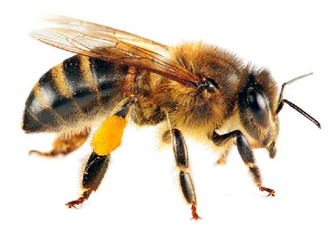 Get Rid Of Wasps In Garden by Bees And Wasps Aai Pest Control Serving Stockton Ca