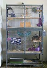 Hd Wallpapers Pet Rat Cage Ideas Modern Wallpaper Ideasirimus