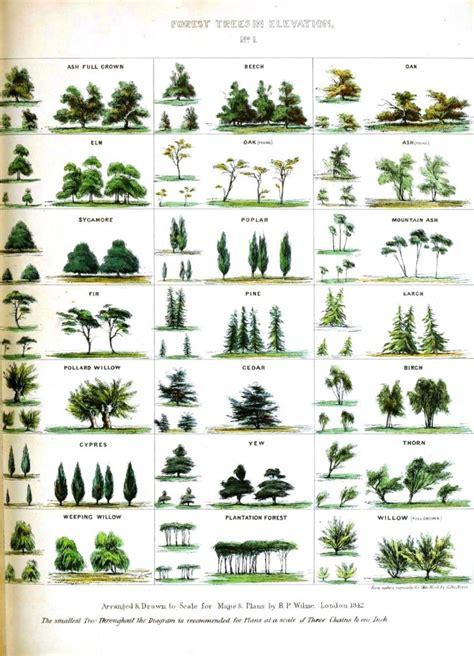botanical trees leaves vintage printable at