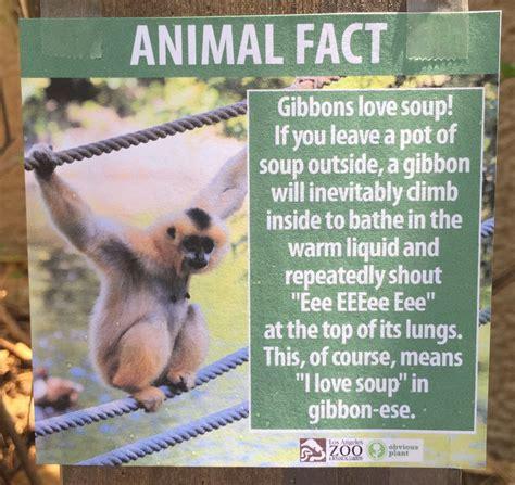 jeff wysaski posts fake animal facts   la zoo
