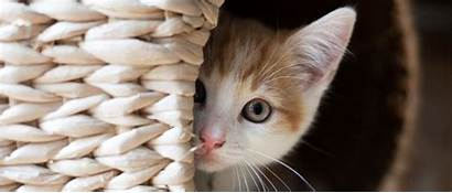 Cat Hiding Cats Frightened Help Kitten Come