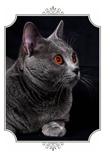 Figaro Allevamento