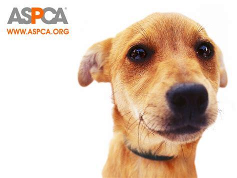 Animal Rights Wallpaper - animal rights animal rights wallpaper 18670883 fanpop