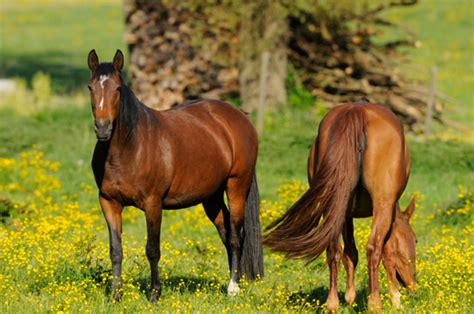healthy horses secret horse thinkstock calling stables stable credit