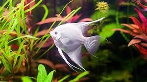 Welche Fische Passen Zusammen Aquarium : welche aquarienfische passen zusammen tier ~ Lizthompson.info Haus und Dekorationen