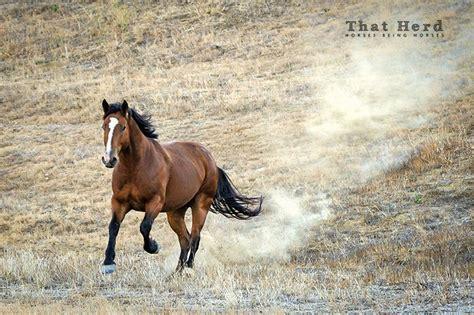 horse horses animals camila