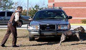 Police Dog Training | Pitbull Police dogs