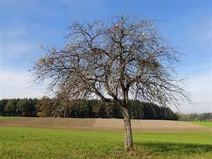 Apfelbaum Schneiden Sommer : apfelbaum schneiden herbst apfelbaum im herbst reicher ~ Lizthompson.info Haus und Dekorationen