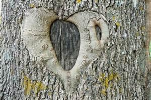 Baum Der Liebe : abstraktes symbol der liebe und der treue auf einem baum stockbild bild von hintergrund farbe ~ Eleganceandgraceweddings.com Haus und Dekorationen