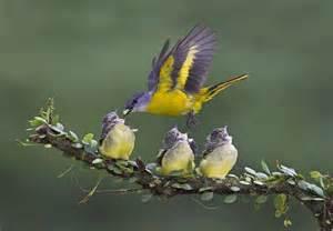 Mother Bird Feeding Young