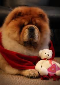 Red Chow