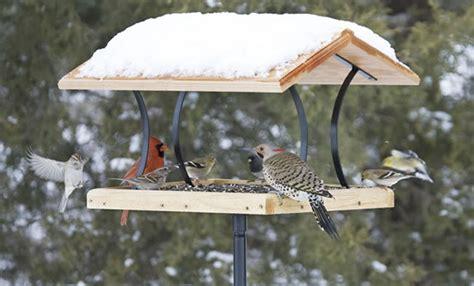tips  winter bird feeding  backyard naturalist