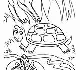 Pond Coloring Pages Frog Drawing Turtle Lily Pad Fish Sheet Habitat Printable Print Sea Drawings Preschoolers Getdrawings Getcolorings Animals Sit sketch template