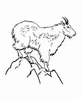 Goat Mountain Coloring Pages Wild Animals Animal Colouring Sheets Mountains Drawing Printable Goats Sheet Honkingdonkey Activity Clip Google Yosemite Cat sketch template