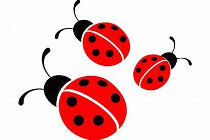 Clipart Ladybird Ladybug Ladybugs Transparent Vector Bug