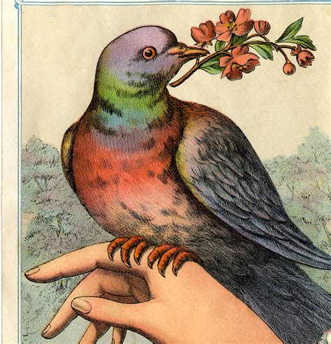 victorian bird  hand image  graphics fairy