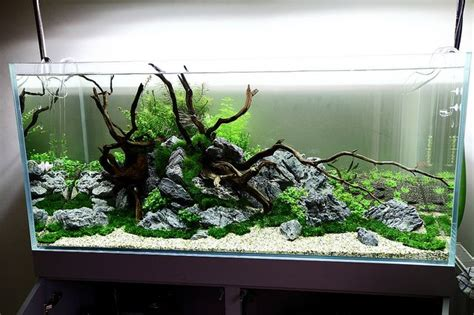 Aquascape Wood by 5 Days Aquascaping Freshwater Aquarium Aquarium