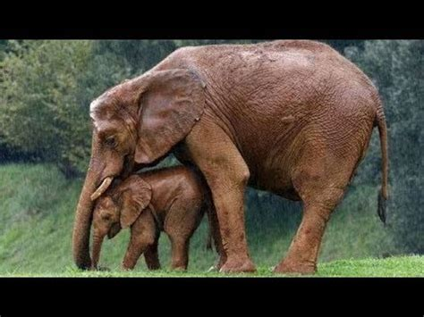 Mother Animals Protecting Their Babies