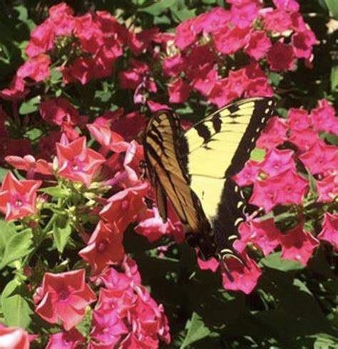 butterfly garden miami miami s butterfly gardens provide and resources