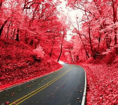Pink Nature Road Desktop Wallpapers Background Screen