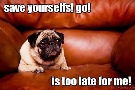 Pug Memes - 88 superb pug memes pictures