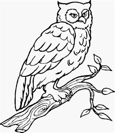 owl coloring pages   owl