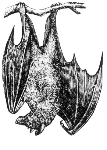 Upside Down Bat Clipart  Clipart Suggest