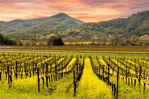 Best Napa Wine The Best Napa Wineries To Visit In 2018 Pursuitist