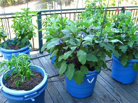 Vegetable Gardening In Blue Containers For Small Patio