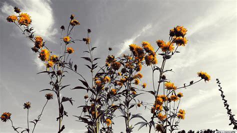 Schöne Gräser Für Den Garten by Die 77 Besten Schwarzwei 223 Hintergrundbilder