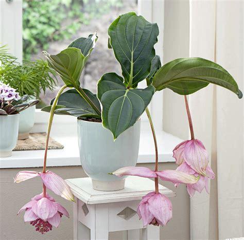 plante verte pour chambre quelle plante verte pour quelle pièce de la maison