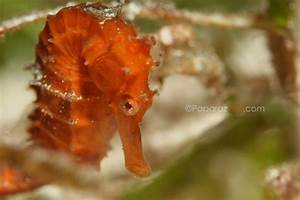 17 Best images about Seahorse on Pinterest | Baby seahorse ...