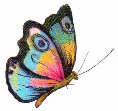 Butterfly Royalty Colorful Clip Butterflies Rainbow Graphics