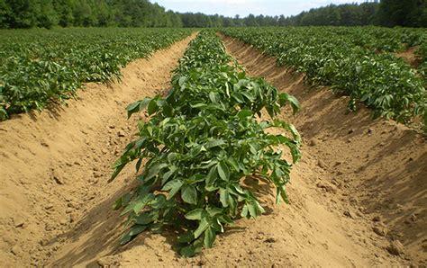 jardinage 192 faire en avril planter des pommes de terre